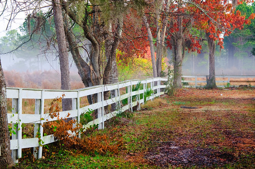 trees horse fog fence landscape south low country southern beaufort seabrook lowcountry superaplus aplusphoto coosaw