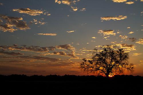 africa travel sunset sky tree nature canon tiere sonnenuntergang sundown wildlife urlaub natur himmel safari afrika baum zambia allrightsreserved 2011 sambia mfuwe southluangwavalley canoneos7d thomasretterath blinkagain copyrightthomasretterath