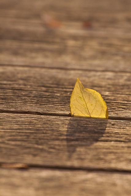 leaf dock