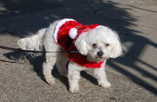 teddy as santa.jpg