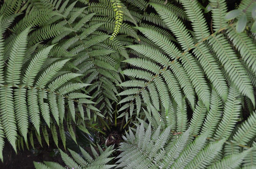 Fern in relief
