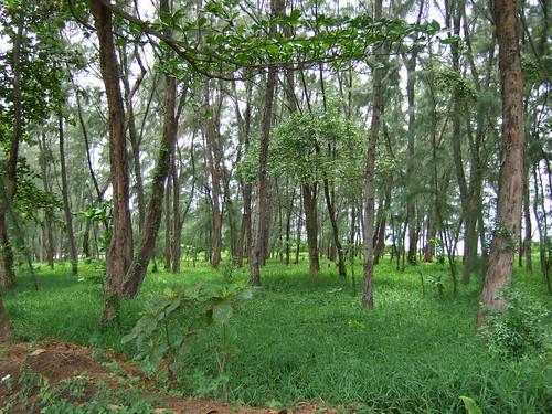 Forested Area Near Beach