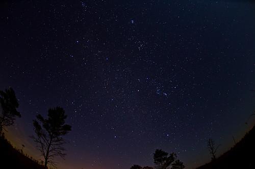 trees sky stars nowhere milkyway fisheye105