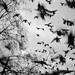 Duvorna i Paris/Doves in Paris by sonicinfusion