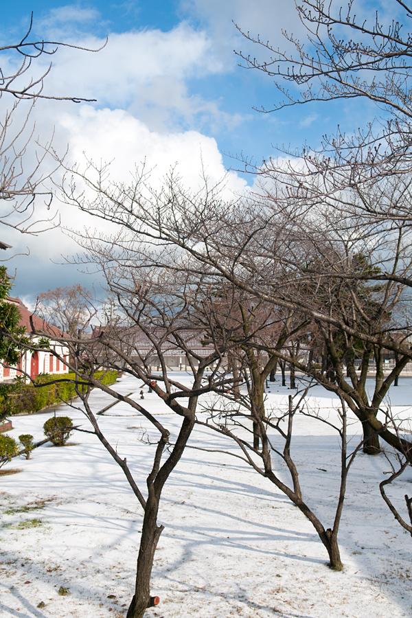 新潟市歴史博物館の景色