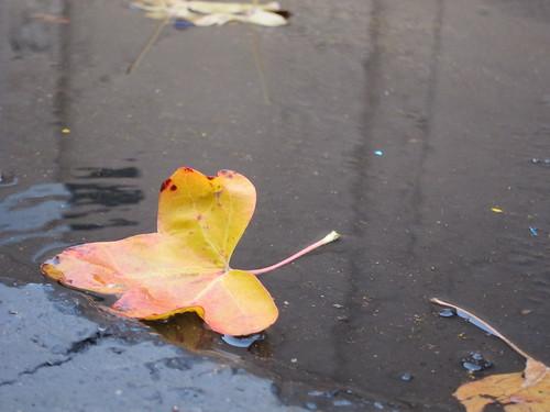 puddle leaf