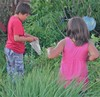 Neighbourhood kids helping to release ladybugs in the back yard