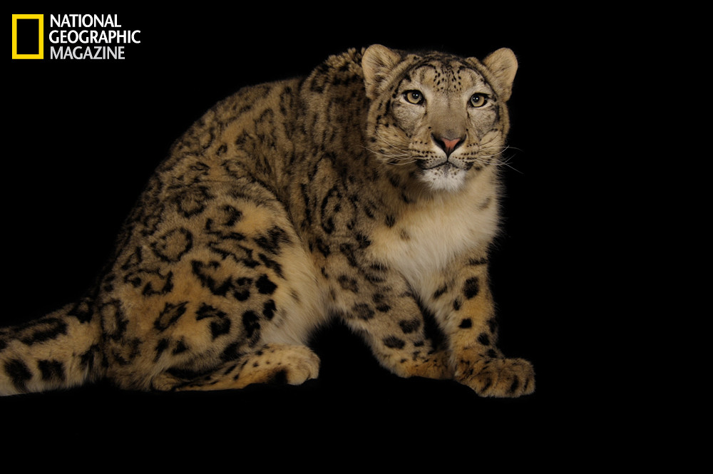 Image of: Wildlife Ive Always Loved Photographer Joel Sartores Minimalistic Portraits Of Endangered Species And Even Was Lucky Enough To Share Series Of His Photographs The Guardian Never Say Goodbye videos Grrlscientist Science The Guardian