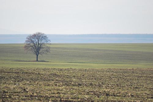 winter tree landscape fa táj tél
