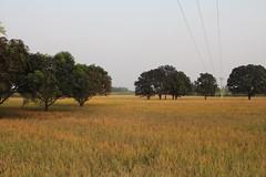Rudrapur, India