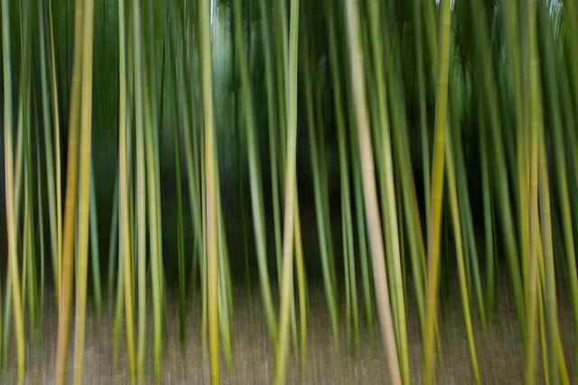 bamboo swipe