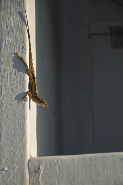 lizzard at angle 2