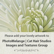 PhotoMelange | Cat Hair Studios Post Processing Texture
