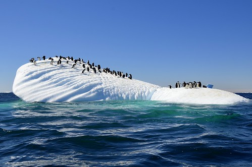 Iceberg infested with Adelie penguins!