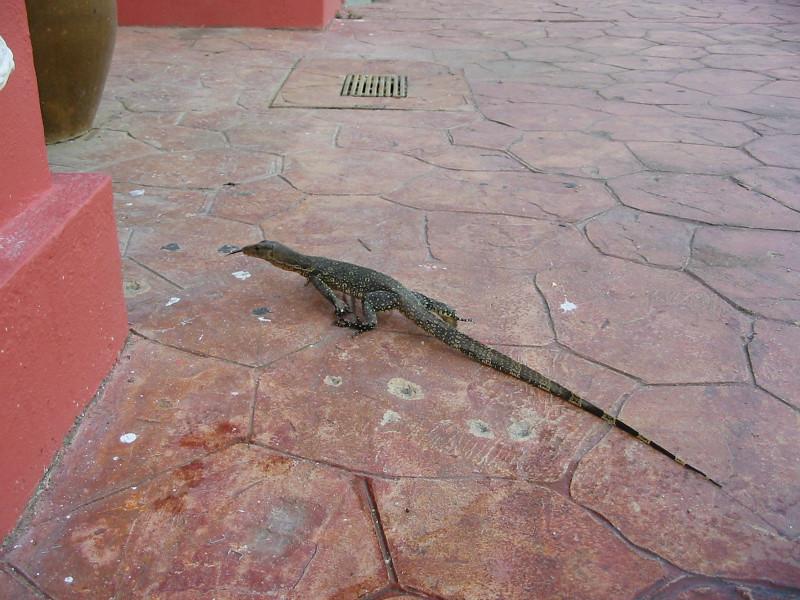 lizard in hotel