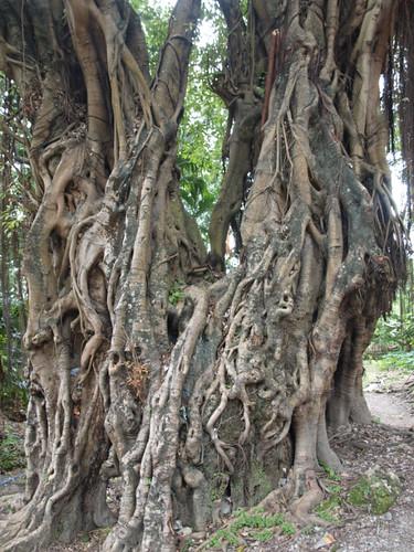 деревья5