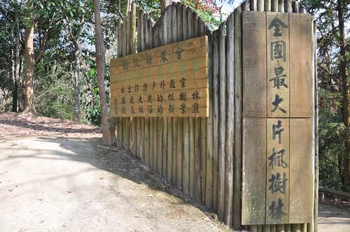 東勢林場-森林浴場