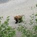 Bear 17