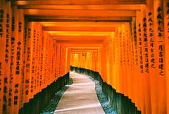 [フリー画像素材] 建築物・町並み, 宗教施設, 神社・鳥居, 神道, 風景 - 日本 ID:201202151200