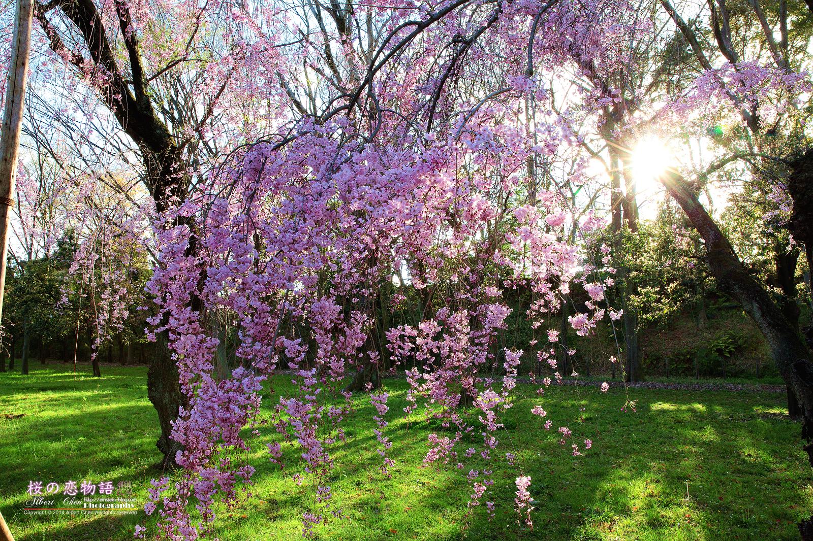 2014-04-04-16h48m54IMG_5011