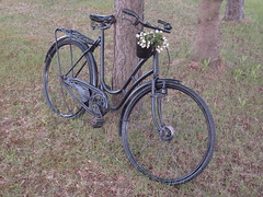 Anemone bicycle