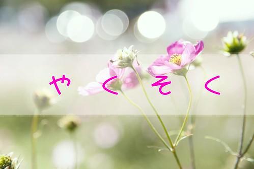 blog_GAK88_kosumosutohikari_TP_V