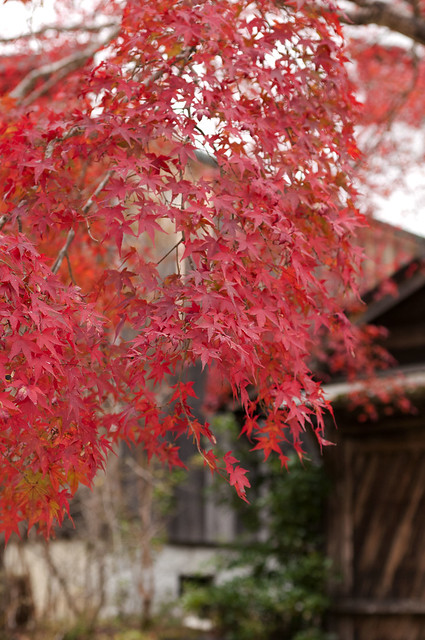 紅葉の古都 京都