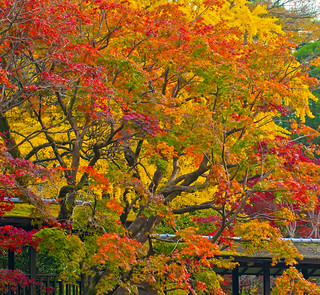 AUTUMN IN HONDOJI TEMPLE