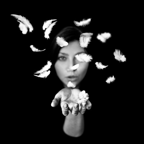 Plumes by Benoit Courti