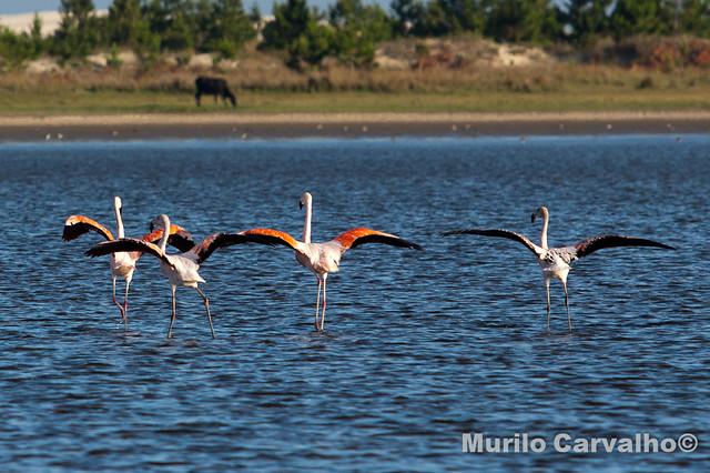 Lagoa do Peixe - Tavares40