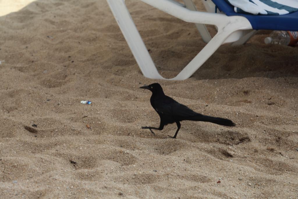 The beach in Acapulco