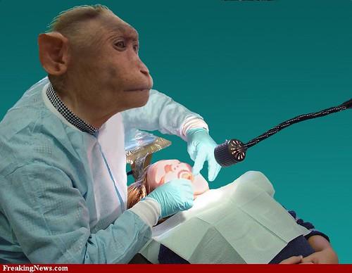 monkey dentist