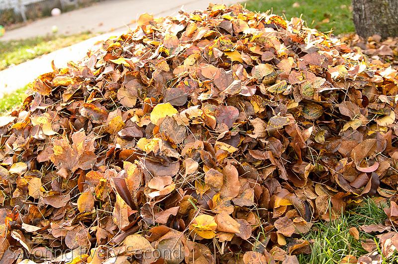 Fall Leaves14-Edit.jpg