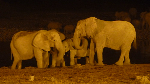 Elephants in the dark - Etosha National Park