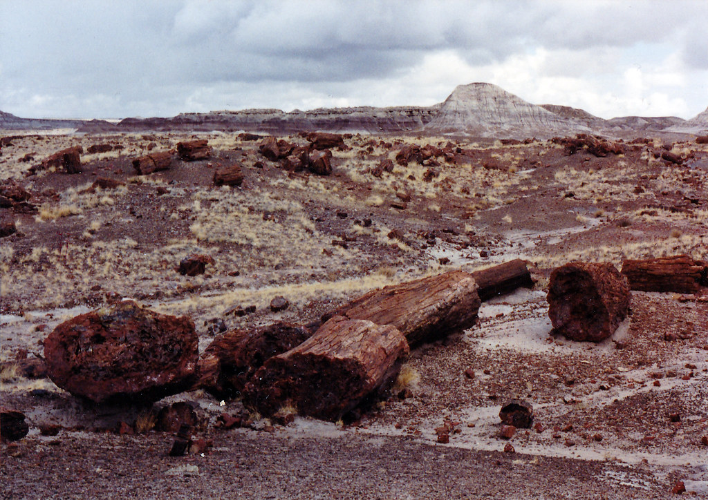 1990, Petrified Forest, Arizona