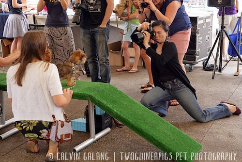 {behind-the-scenes} yours truly by calvin galang for twoguineapigs pet photography