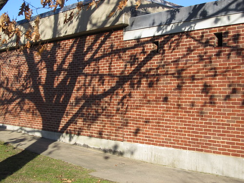 Oak tree shadow