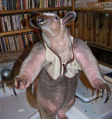 Anteater in Fishing vest