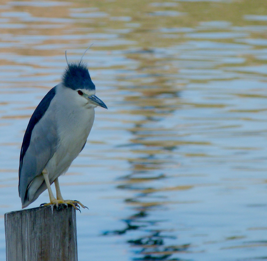 17-12-2011-punk-night-heron2