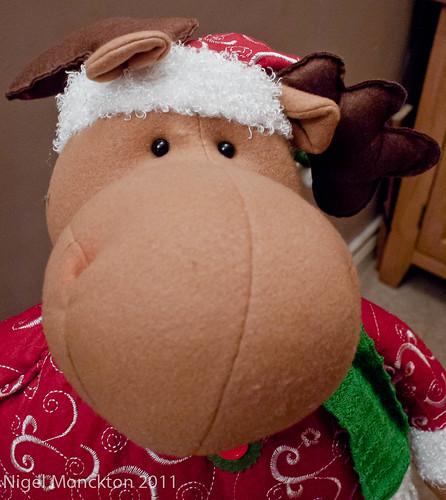 1000/673: 16 Dec 2011: Brown-nosed reindeer by nmonckton