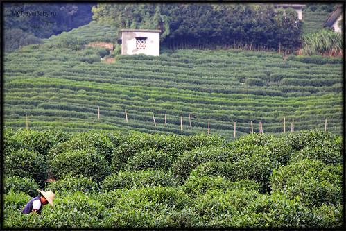 han-tea025