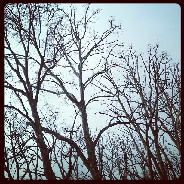 Grey sky, bare trees. Berlin in winter.