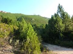 Punta Radichella par la sente de chasseurs : au départ depuis la fin de la piste de Radichella, la crête sous Punta Radichella