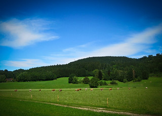 austria field with cows.jpg