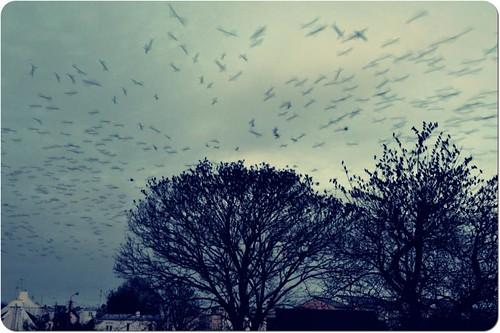 ...ça fait rire les oiseaux... by skoub