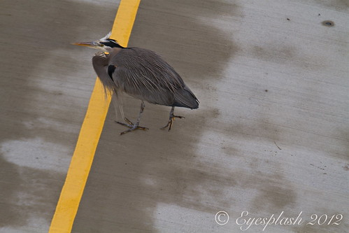 Why did the Heron cross the line?