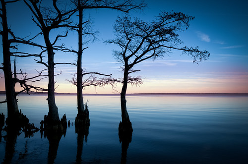 travel blue trees sky usa water river photography virginia us scenery unitedstatesofamerica shoreline scenic va late cypress knees silhouetted skynoir bybilldickinsonskynoircom
