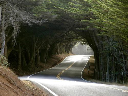 beautiful road_014