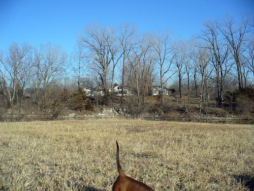 2012-01-10 - Ralphie Digging - 0007
