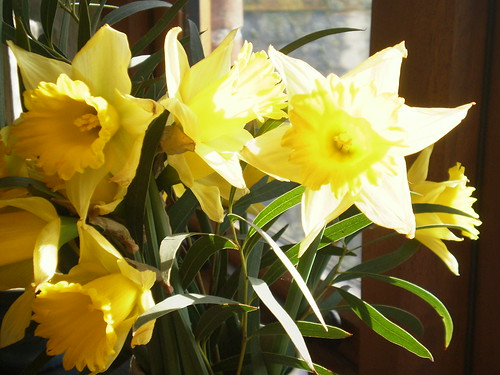 Daffs in january